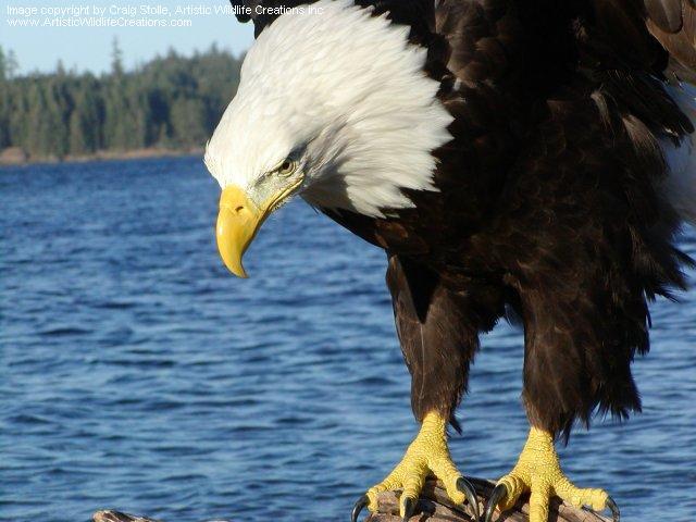 Bird Mounts Craig Stolle Award Winning Taxidermist