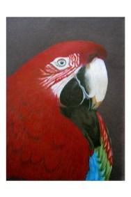 """Macaw 9""""x 12"""""""