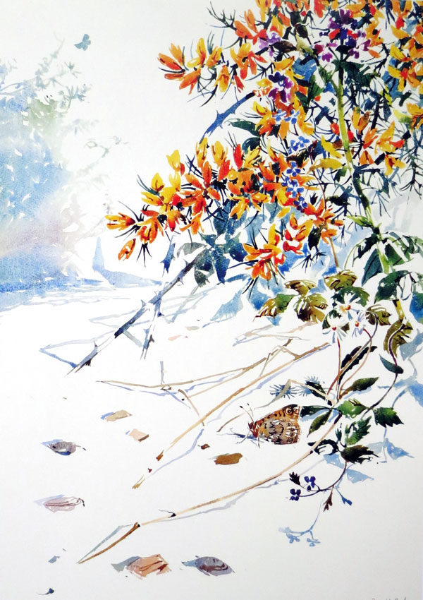Darren Woodhead - Wall brown butterfy guarding territory