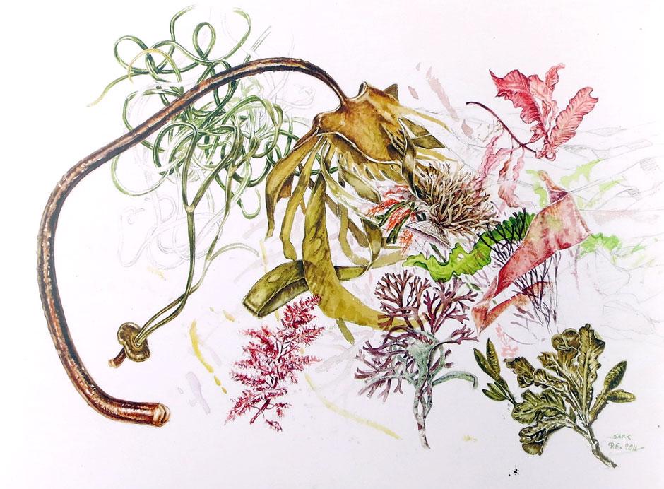 Piet Eggen - Sark Seaweeds