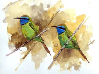 Little green Bee eaters, Barry Van Dusen - USA