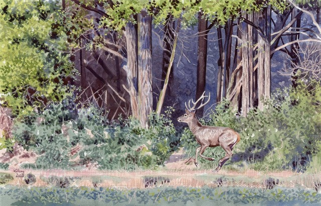 Young stag running by Kókay Szcabolcs, Hungary