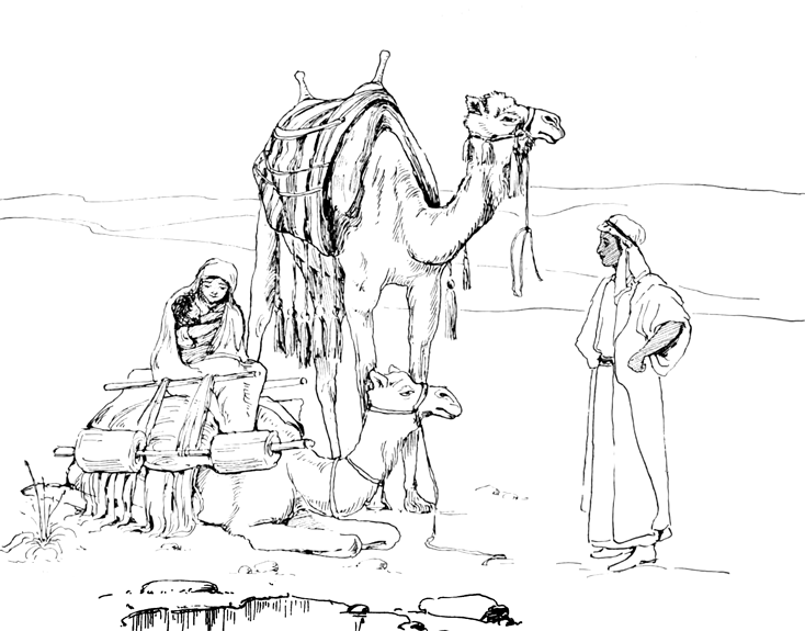 Camels Resting in the Desert with Parents and Baby