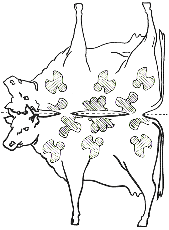 Diagram Of A Plate Of The Cow Cow Crafts For Kids Make Cows With Arts And Crafts