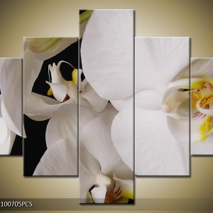 bloemen canvas 406 – witte orchidee close-up