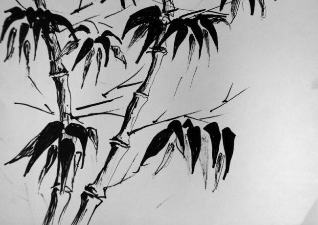 bambou dessin par luc fournier le ray