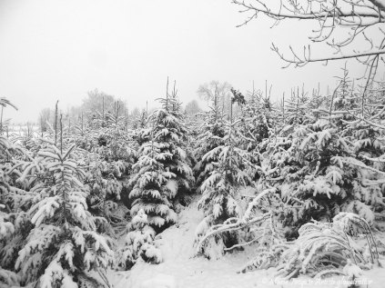 Ensemble sous cette neige
