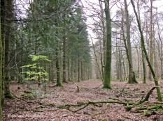La forêt domaniale du Perche