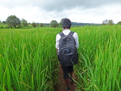 On suit le guide dans les rizières