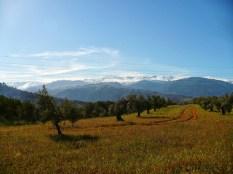 Dans les champs de Granada