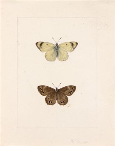 un papillon blanc appele gaze ou pieride de laubepine et un tabac despagne orange a points noirs un papillon jaune et noir appele colias nastes et un nymphalidae satyrnae marron a points