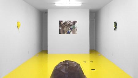 'Puppies Puppies: HorseshoeCrabs HorseshoeCrabs' Freddy Gallery