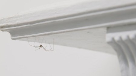 Pierre Huyghe Brings Spiders, Quails, and