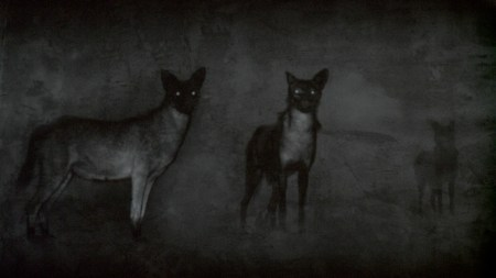 the Company of Jackals: Michal Rovner's