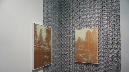 Serenity Now: James Hoff's 'Useless Landscapes'