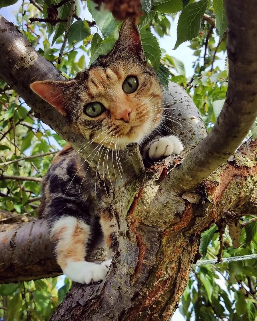 Kitty__By Novalee