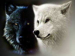 Tale of Two Wolves, Wolves, Adventure quotes, Adventure, Inspiration