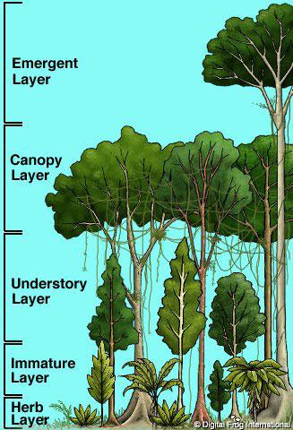 diagram of a tropical forest vw jetta radio wiring & beach – art luis