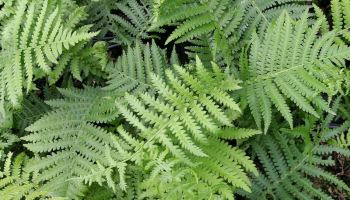 Southern Garden Design find this pin and more on southern gardens Native Ferns For Southern Gardens