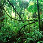 Figure 26 Jungle