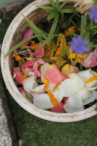 fleurs roses  les fleurs du jardin