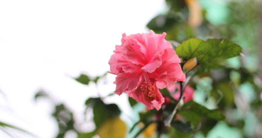 fleurs d été fleur exotique