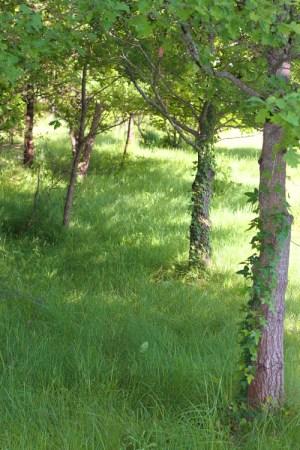 faire un jardin planter arbre