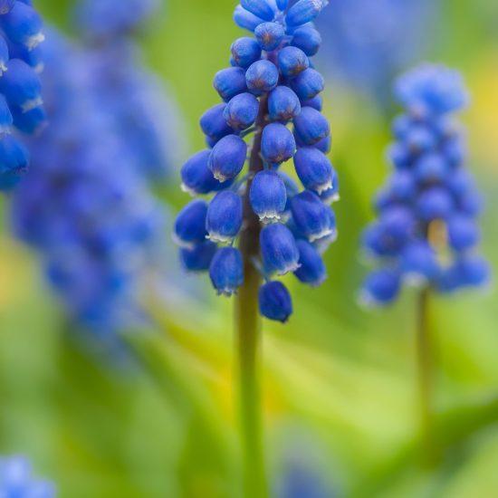 plante jardin bordeaux