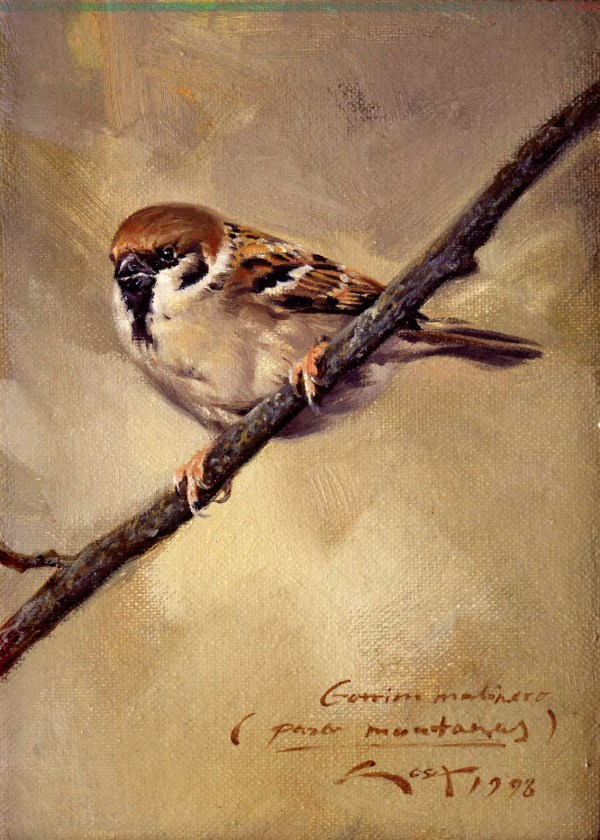 Sparrow Paintings