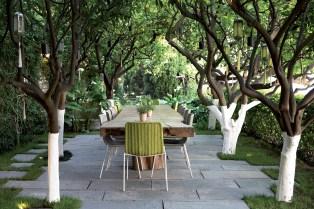 Riviera - Casa - Garden - Tree