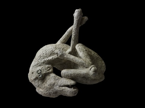 Plaster cast of a dog. Dalla Domus di Orfeo, Pompeii, 79 d.C. - Copyright Soprintendenza Speciale per i Beni Archeologici di Napoli e Pompei / Trustees of the British Museum