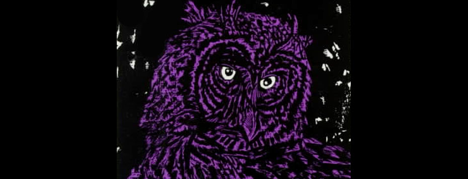 Illustrated Owls