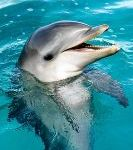 Dolphins May Not Be as Smart as We Thought