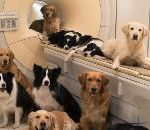Brain Scan: How Dog Brains Are Similar To Human Brains
