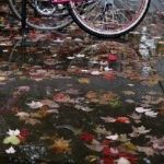 A pink bicycle is seen reflected in a leaf-covered puddle on campus at Yale University in New Haven, Connecticut November 12, 2015. REUTERS/Shannon Stapleton      TPX IMAGES OF THE DAY      - RTS6PV3