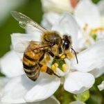 The New York Times Tells You What It's Like To Be A Bee