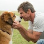 A Dog S Purpose Abuse Fake