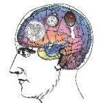 How Does The Brain Make Memories?
