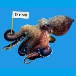 Is The Octopus Really The Resourceful, Impish Genius Of The Invertebrate World?
