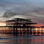 Audiences Are Really Like Murmurations Of Starlings