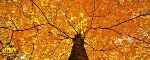 autumn2013wallpapercollection00