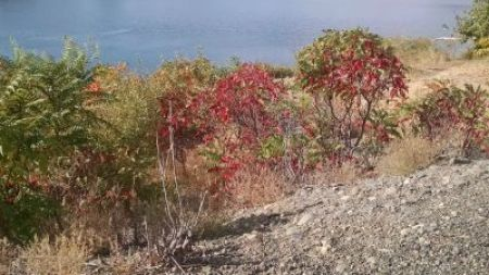 Lake Myron Foliage 91515
