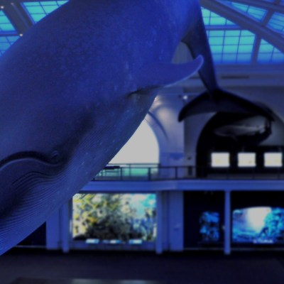 Private Tours of the American Museum of Natural History