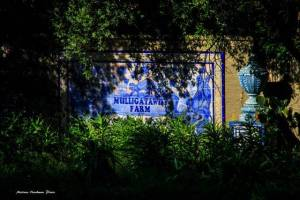 Mulligatawny Farm (Photo - Marinus Haakman)