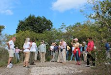 On Mound Key 20 At the Top of Ceremonial Mound