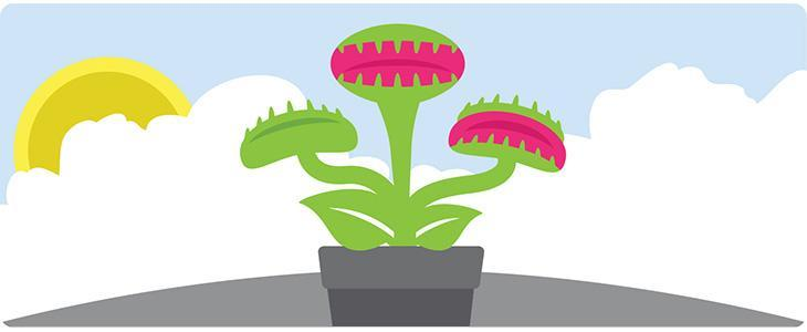Your Website is a Venus Fly Trap