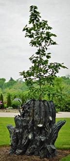 """""""Tree of Life, Future Tense"""", cast bronze and mixed media, 1991-1993 by Mary Jo Bole. Red oak tree from Oakland Nursery."""