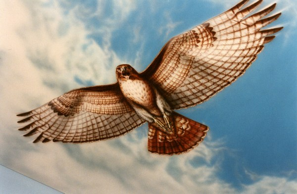 Red Tail Hawk Art