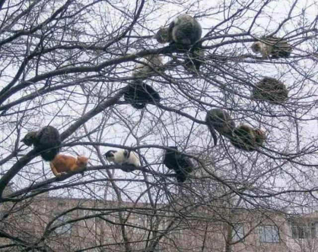 cats_on_the_tree_04