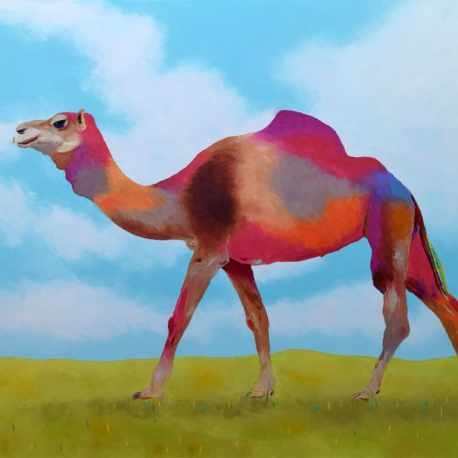 camel72